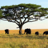 Why Now Is The Time To Take An African Wildlife Holiday