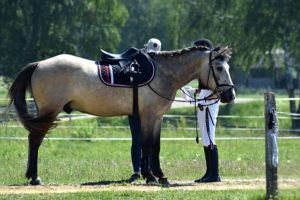 equestrian-1480944_640